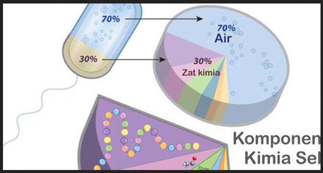 UKBM BIOLOGI Materi Bioproses
