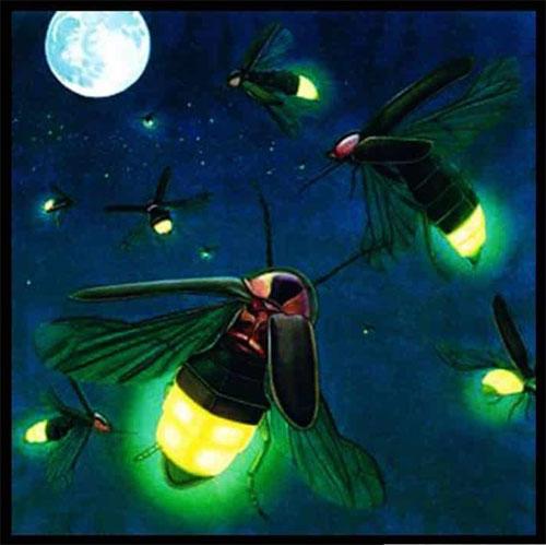 Kunang-kunang Yang Bercahaya