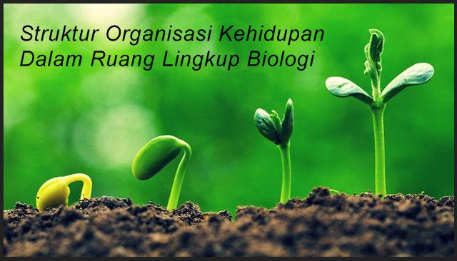 Struktur Organisasi Kehidupan Dalam Ruang Lingkup Biologi